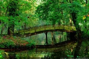 normal_Un-pont-se-reflete-dans-l-eau